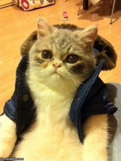 Cats in clothes - love
