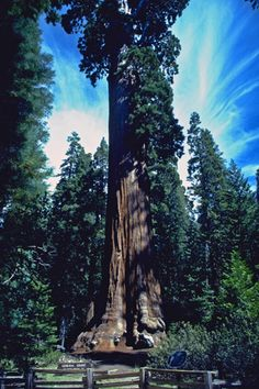 Kings Canyon National Park, in the Sierra Nevada mountains of California. It is home to groves of giant sequoia trees, the largest single organisms on earth.