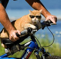Time to take the training wheels off, Jim. This cat's ready to ride.
