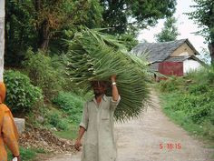India: Himachal Pradesh, Kangra Valley life