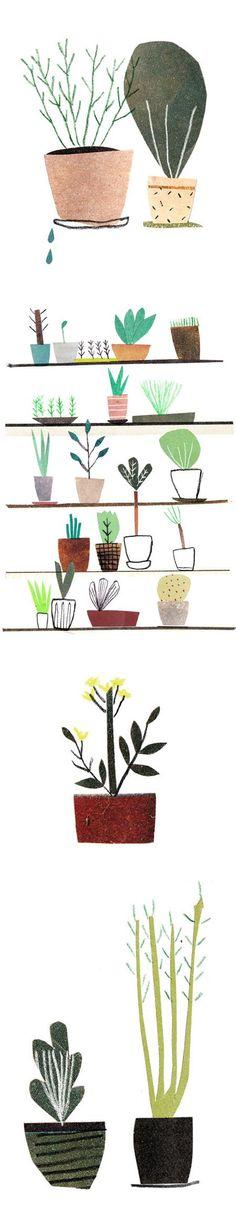 artist/illustrator agata krolak (plants)