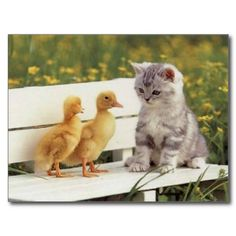 These funny cats and silly cats will make you laugh. Check out these funny cat videos in this funny cats compilation Funny Cat Photos, Funny Cat Videos, Funny Cats, Kitten Videos, Funny Duck, Funny Pictures, Duck Pictures, Kitten Photos, Funny Images