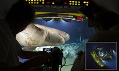 Crew members feared for their lives some 700 metres below the ocean surface as they were faced with seven of the sharks attempting to smash the glass of their sub. Bbc Blue Planet, Tv 2017, Sharks, Planets, Shark, Plants