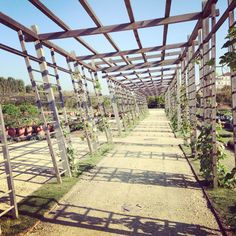 Venaria Reale| Potager Royal| #UrbanFarming| #CoronaVerde #torino