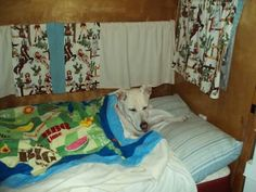 Lilly in the kitchen bunk @ the Grand Canyon. Of our 1955 12' Cruiser Super 8. DB