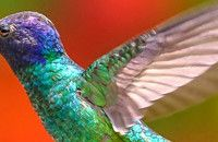 Tips for Photographing Hummingbirds