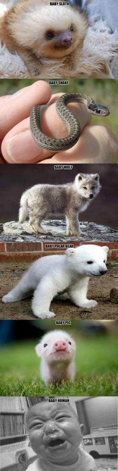 Baby animals vs. baby humans…