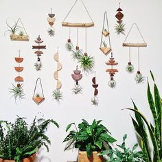 Handcrafted and one of a kind wall hangings featuring wild air plants. Hanging Air Plants Diy, Indoor Plant Wall, Plant Wall Decor, Hanging Plant Wall, Plant Projects, Air Plant Display, Plant Table, Air Plant Terrarium, Bathroom Plants