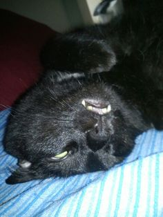 Home.Family Cats, Animals, Gatos, Animales, Kitty Cats, Animaux, Animal Memes, Cat Breeds, Kitty