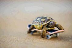 Awe! Baby turtle skater!