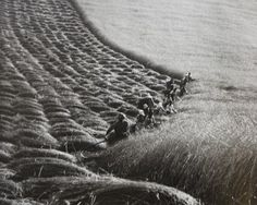 Ernö Vadas -   Harvest, 1937