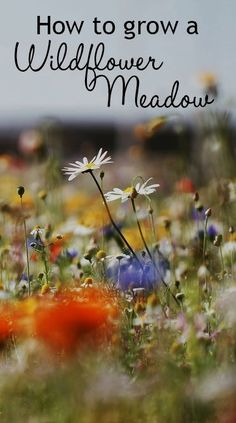 How to grow a wildflower meadow in your garden. You can grow a wildflower patch in your garden - it works best on poor soil. Sow the flower seeds and water in. Check for weeds and water occasionally unt