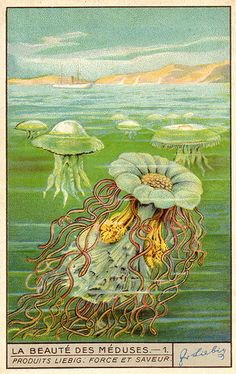 la beauté des méduses