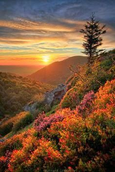 Fall Colors at Sunrise