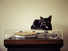 Thorens td520 / Sme 3012r / Denon dl103 #cat