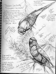rainbowlorikeets--visit the page to see a lot of other lovely bird drawings