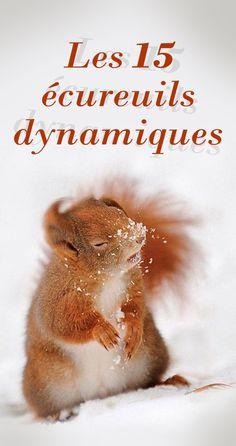 Très populaires, les écureuils appartiennent à l'espèce des rongeurs grimpeurs. Ils sont caractérisés par leur queue touffue.