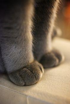 もこもこ ... Kitty paws. My favorite ♡