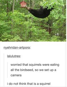 Is it actually a squirrel that eats all your birdseed? I think not!