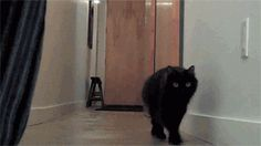 Animated GIF of cat getting distracted by a balloon