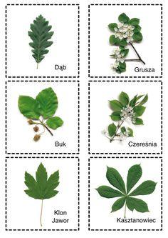 Trees To Plant, Plant Leaves, Learn Polish, Polish Language, Foto Transfer, Autumn Activities For Kids, Montessori Activities, My Secret Garden, School Resources