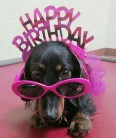 DOG Happy Birthday Wishes Quotes - Happy Birthday Funny - Funny Birthday meme - - DOG Happy Birthday Wishes Quotes The post DOG Happy Birthday Wishes Quotes appeared first on Gag Dad. Happy Birthday Wishes Quotes, Birthday Card Sayings, Birthday Wishes Cards, Happy Birthday Greetings, Happy Birthday Funny, Happy Birthday With Dogs, Cute Happy Birthday Pictures, Happy Quotes, Birthday Meme Dog