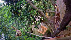 Cómo es vivir en una verdadera Casa del Árbol  Foto: Booking