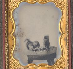 Ninth plate Neff's Patent melainotype of two squirrels eating nuts or grain