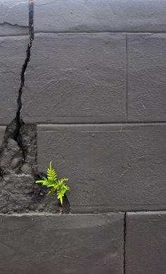 Fern growing in a concrete block wall Concrete Block Walls, Dame Nature, Bloom Where Youre Planted, Amazing Nature, Mother Nature, Wild Flowers, Beautiful Flowers, Cool Photos, Nature Photography