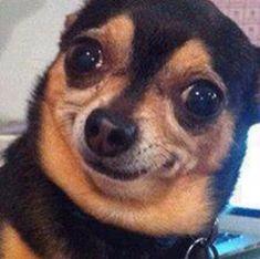 32 Best Crazy Cat Dog Faces Images Cut Animals Funny Animals