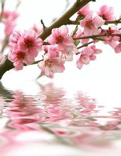 8.99AUD - Beautiful Flower Set Vol: 3 Home Decor Canvas Print, Choose Your Size. #ebay #Home & Garden