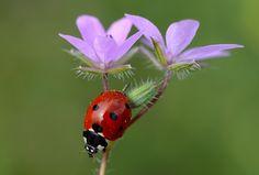 delicate by yasin mortaş - Photo 104785619 - 500px