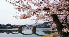 The Kintai-kyo Bridge has been Iwakuni's most distinguished landmark and a subject of admiration for hundreds of years