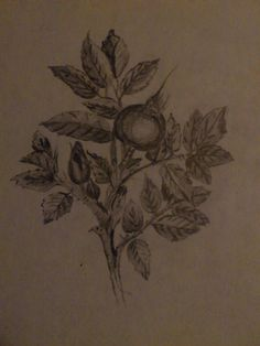 Drawing Leaf Tattoos, Dream Catcher, Drawings, Blogging, Dreamcatchers, Sketches, Drawing, Portrait, Draw