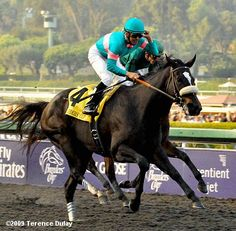 Zenyatta wins the 2009 Breeders' Cup Classic over Gio Ponti at Santa Anita. - Zenyatta, 5yo, Mike Smith, John Shirreffs, Ann & Jerry Moss, 2:00.62