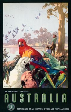 "vintagraphblog: "" Australian Parrots. ""Australia. Particulars at all shipping and travel agencies."" Issued by the Australian National Travel Association, circa 1930s. (Australian Parrots 
