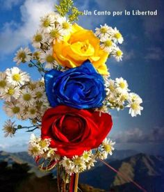 Armenian Flag, Colombian Culture, Green Zone, Pop Art Wallpaper, Quito Ecuador, Just Pray, Cali Colombia, Good Morning Friends, Axl Rose