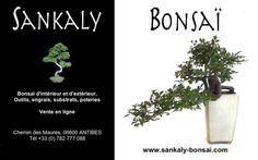 Superbe Bonsai Semi-Cascade Orme de Chine de grande taille. Elle mesure 45 cm de hauteur sur 65 cm d'envergure. Bonsai disponible à la vente en ligne chez www.sankaly-bonsai.com  http://www.sankaly-bonsai.com/achat-vente-acheter-bonsai-exterieur-feuillus-sankaly-bonsai/3127-vente-de-bonsai-orme-de-chine-45-cm-ormc140901-sankaly-bonsai.html