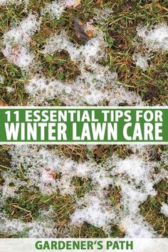11 Winter Lawn Care Essentials # Pflege 11 Winter Lawn C