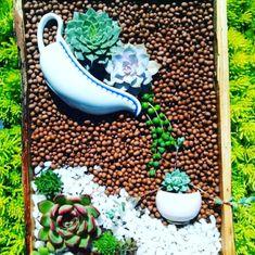 13 Laying Succulent Arrangements That's A True Delight - HomelySmart - garden landscaping Succulent Landscaping, Succulent Gardening, Planting Succulents, Garden Landscaping, Cacti Garden, Succulent Planters, Hanging Planters, Landscaping Ideas, Cactus Plants