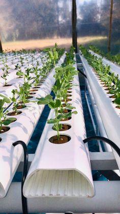 Shop powered by PrestaShop Indoor Farming, Hydroponic Farming, Aquaponics Greenhouse, Hydroponic Growing, Aquaponics System, Hydroponics, Backyard Vegetable Gardens, Vegetable Garden Design, Urban Agriculture