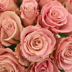 Charming Unique Pink Rose