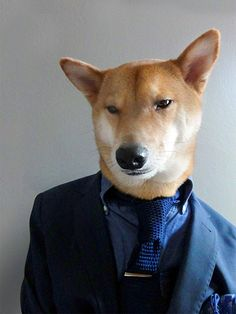 Dog Draper from the award winning series, Mad dogs