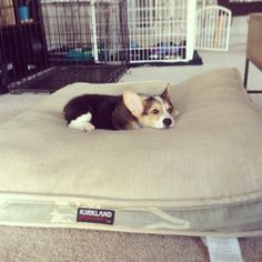 Little dog, big bed. Be sure to follow me on Tumblr, Instagram,...