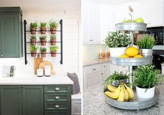 edible-kitchen-plants-04