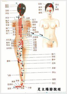 SALUD CON MEDICINA TRADICIONAL CHINA - TERÀPIES NATURALS - Recorrido de los meridianos
