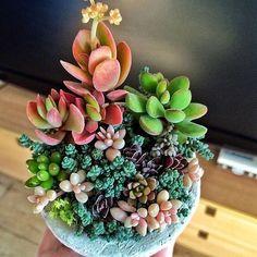 Lil' succulent arrangement (Photo: with-beauty-and-grace.tumblr.com)
