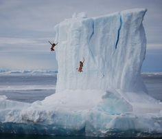 iceberg jumping