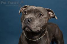 Hondenfotograaf Amsterdam - PetPlan Winner actie - Honden op de Winnershow-6