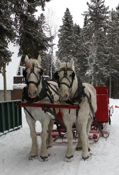 """Centennial Park /  A Winter Sleigh Ride with Horses / Come join me on (""""Believe in the Magic of Christmas"""" on Facebook & Pinterest) I plan to Surprise & Delight you this Holiday Season!  XOX Jody"""